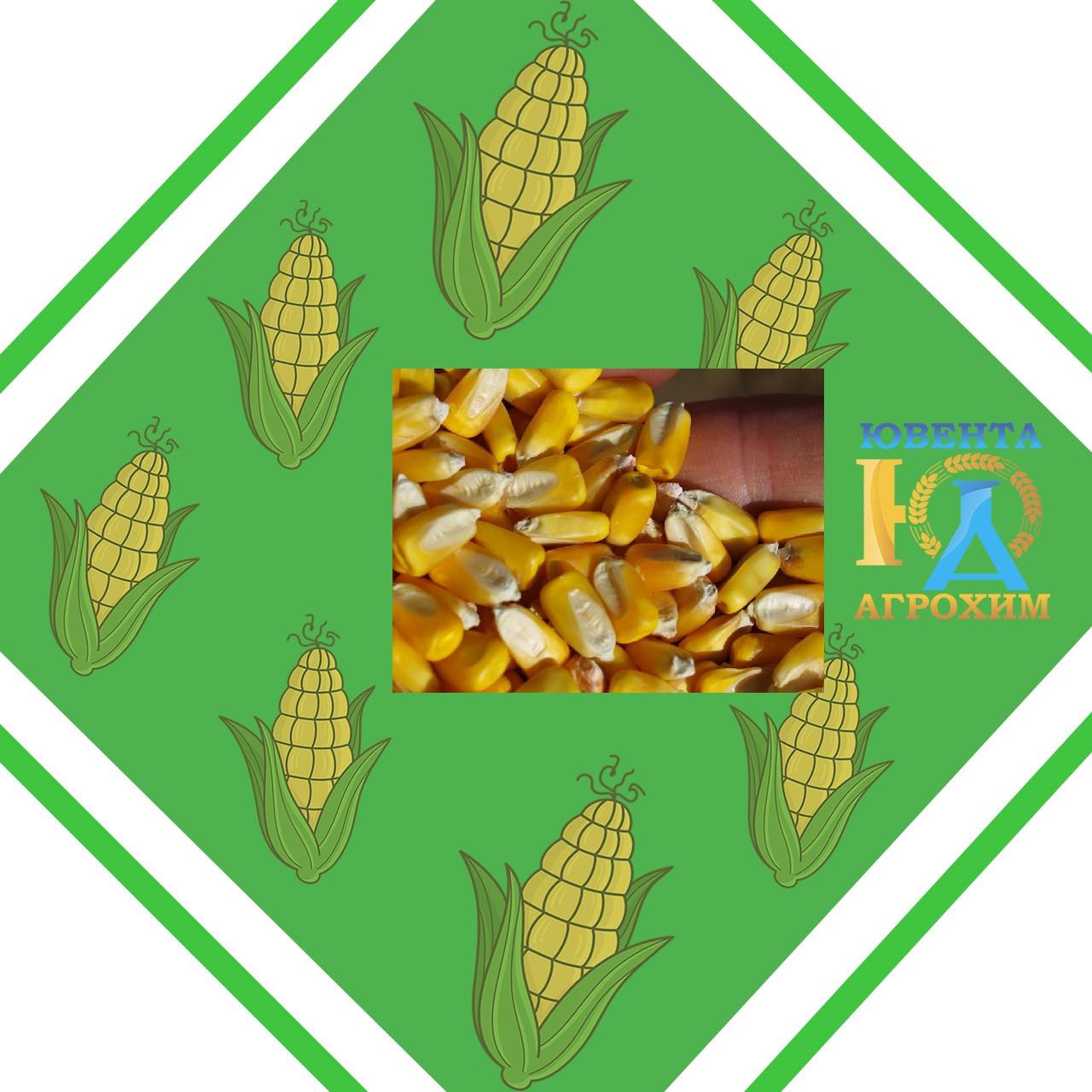 Семена кукурузы импортной селекции MAS 36.А