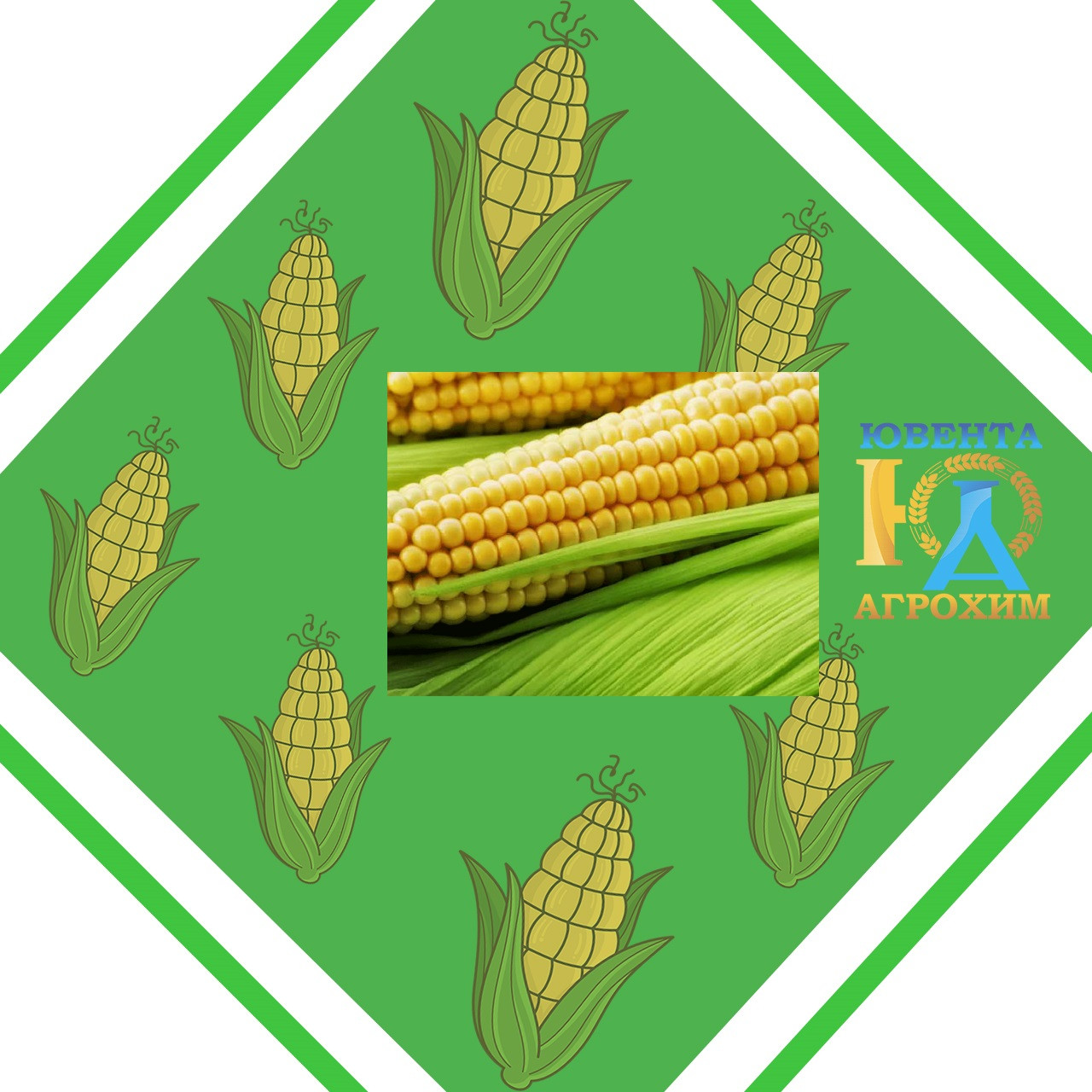 Импортные семена кукурузы на посев MAS 33.А
