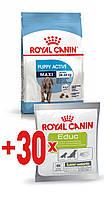 АКЦИЯ! Royal Canin MAXI PUPPY Active 15 кг + ПОДАРОК!
