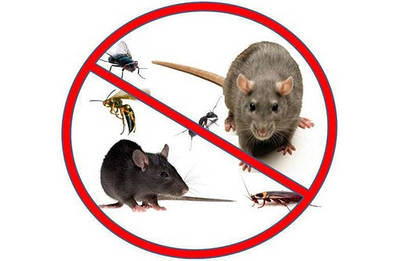 Услуги по дератизации, дезинсекции,дезинфекции,фумигации, озонирование, дезинфекция воды.