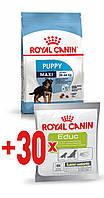 АКЦИЯ! Royal Canin MAXI PUPPY 15 кг + ПОДАРОК!