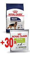 АКЦИЯ! Royal Canin MAXI ADULT 15 кг + ПОДАРОК!