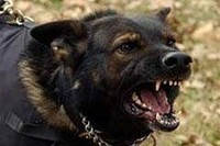 Принцип действия ультразвуковой отпугиватель собак