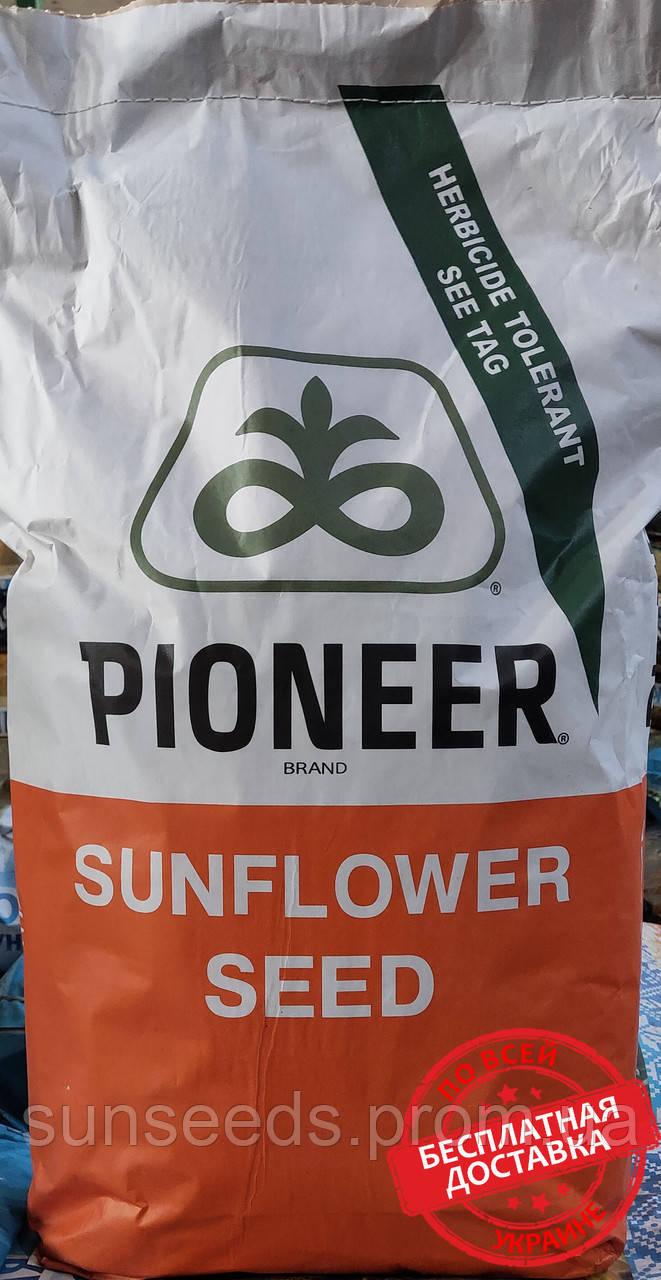 П64ЛЕ99 (P64LE99) (Техн. SUMO. 50грм) Семена подсолнечника