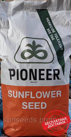 П64ЛЕ99 (P64LE99) (Техн. SUMO. 50грм) Семена подсолнечника, фото 2