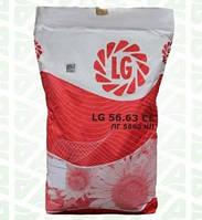 Семена подсолнечника ЛГ5663 кл, фото 1