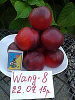 Саженец нектарина Ванг – 8 (США)