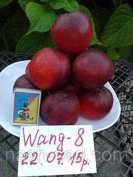 Саженцы нектарина Ванг – 8 (США)