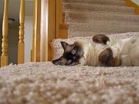 Влажная чистка ковров на дому Одесса
