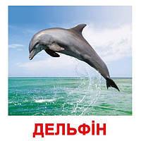"""Карточки большие украинские с фактами """"Мешканці водойм"""" 20шт., методика Глена Домана, в пак. 16,5*19,5см,"""