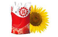 Насіння соняшника LG 5582 (Лімагрейн)