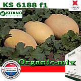 Семена, дыня очень крупная КS 6188 ранняя 1000 семян ТМ Kitano Seeds, фото 2