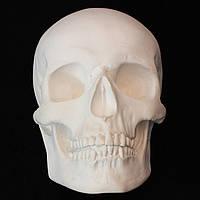 Модель черепа из гипса, маска на стену, декоративный, белого цвета, в натуральную величину под роспись