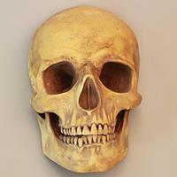 Череп з гіпсу, зістарений, маска на стіну, декоративний, в натуральну величину під розпис, фото 1