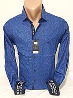 Рубашка мужская с длинным рукавом Pierrini  vd-0101 васильковая приталенная в узор стрейч коттон Турция 2XL