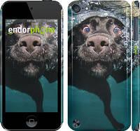 "Чехол на iPod Touch 5 Смешной плавающий пёс ""147c-35"""