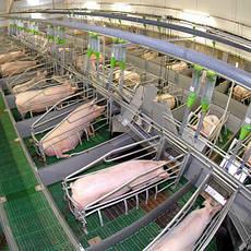 Оборудование для свиноводства