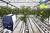 Печь на дровах отопительная  Эконом 3в1