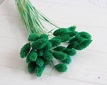 "Сухоцвет "" Фалярис ""  ,   зеленый      33 шт"