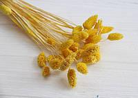 """Сухоцвет """" Фалярис """"  ,  желтый      33 шт"""