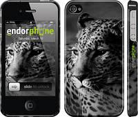 """Чехол на iPhone 4 Леопард 3 """"854c-15"""""""
