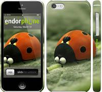 "Чехол на iPhone 5c Букашки. Приключение в Долине муравьев v2 ""2609c-23"""