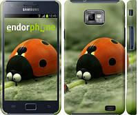 "Чехол на Samsung Galaxy S2 i9100 Букашки. Приключение в Долине муравьев v2 ""2609c-14"""