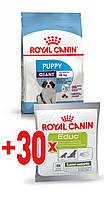 АКЦИЯ! Royal Canin GIANT PUPPY 15 кг + ПОДАРОК!