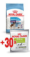 АКЦИЯ! Royal Canin GIANT JUNIOR ACTIVE 15 кг + ПОДАРОК!