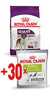 АКЦИЯ! Royal Canin GIANT ADULT 15 кг + ПОДАРОК!