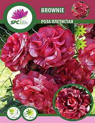 Роза плетистая Brownie