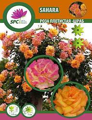 Роза плетистая-шраб Sahara