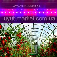 Фитолампа для выращивания рассады огурцов, помидор 16Вт 1,2м Т8 (4красных:2синих)