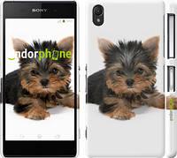 """Чехол на Sony Xperia Z2 D6502/D6503 Щенок йоркширского терьера """"931c-43"""""""