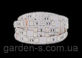 Светодиодная LED лента гибкая 12V PROLUM™ IP20 5050\60 PRO, Белый (5500-6000К)