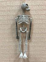 Подвесной скелет 33 см, фото 1