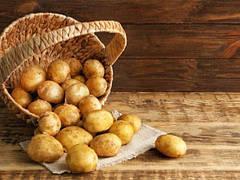 Основные особенности картофеля сорт Латона