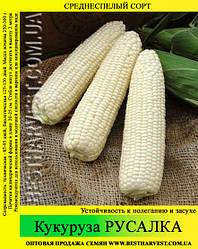 Насіння кукурудзи «Русалка» 1 кг