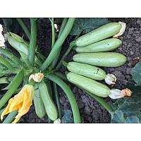 Семена кабачка EZ 31 F1 (250семян) Libra Seeds (Erste Zaden)