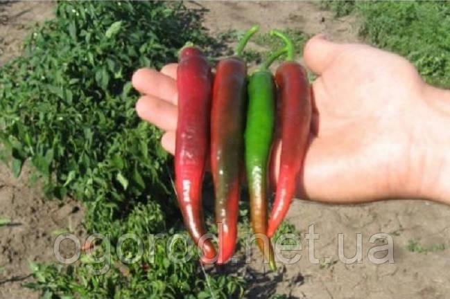Імпала (Bibo F1) 5 грам насіння гіркого перцю Clause, Франція