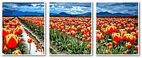 Картины по номерам 50х120 см. Триптих Поля тюльпанов, фото 1