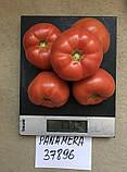 Панамера F1 250 шт семена томата высокорослого розового Clause Франция, фото 2