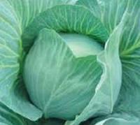 Семена капусты сорт Куизор F1 SG,б/к 2500 шт