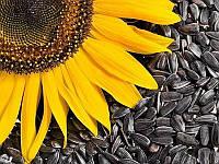 Семена подсолнечника покупай, скидку на гербицид получай!