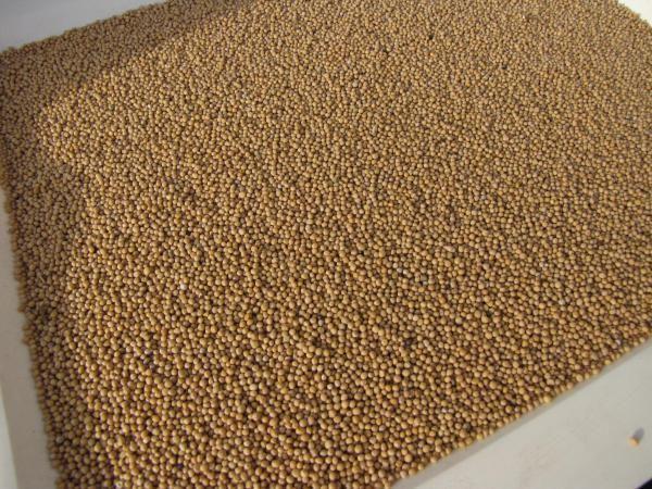 Семена горчицы белой Каролина