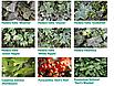 Mobilane Green Screen, м.кв., фото 4
