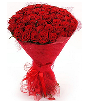Букет красных бархатных роз 51шт