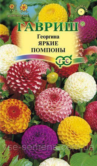 Георгина Яркие помпоны, смесь б/п 0,2 г (Гавриш)