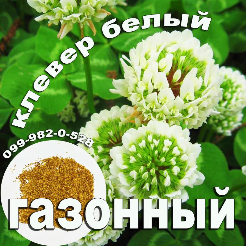 Клевер белый 300г семена 100% можно добавлять в газон использовать как цветущий карликовый
