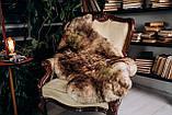 Овеча Шкура з коричневими кінчиками, розмір 120х80, фото 5